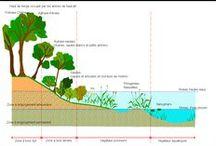 La Ripisylve, corridor biologique / Les arbres et la végétation des cours d'eau ont un rôle capital de stabilisation des berges ainsi que des fonctions d'absorption et de filtration. Ils servent également de voie de communication pour la faune et la flore. Détruire cette formation, appelée ripisylve ( forêt des berges) , même partiellement pour le simple plaisir visuel de voir la rivière, de dégager un endroit de pêche, de ne pas à avoir à entretenir les arbres ou d'agrandir l'espace à cultiver, est une grave erreur.