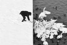 F'otomagie in bianco e nero / Fotografare è porre sula stessa linea di mira la mente, gli occhi e il cuore. Henri Cartier-Bresson