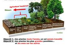 Agroforesterie / L'agroforesterie désigne l'association d'arbres et de cultures ou d'animaux sur une même parcelle agricole, en bordure ou en plein champ. Il existe une grande diversité d'aménagements agroforestiers : alignements intra-parcellaires, haies, arbres émondés (trognes), arbres isolés, bords de cours d'eau (ripisylves)…  http://www.agroforesterie.fr