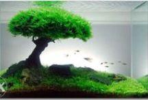 Your Own Professional Aquarium / Proponowane aranżacje wnętrza zbiornika ;)