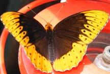 Mariposas (Butterfly's) / by Mariella Bobadilla Pichardo