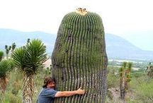 cactus / all we can do with cactus, esprit of Nuagecarré ;)- one element in product, in urbain, in toy ...