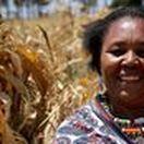 Economic Development / Improving the lives of Maasai girls in Amboseli, Kenya through Economic Development