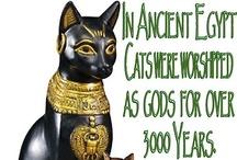 Bast Cat Goddess / Cat Goddesses  / by Jamie Clemons