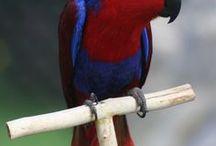 Fid (feathered kid)