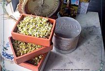 Blötlägga & grodda! / Blötlägga och grodda är ett enkelt och kul sätt för att öka näringen och få bönor och frön mer lättsmälta!