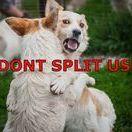 Hunde in Not suchen ein Zuhause Hundevermittlung aus Rumänien / www.Hundehilferumaenien.com     Unsere zu vermittelnden Hunde kommen aus Rumänien.     Sie kämpfen täglich ums Überleben auf den harten Straßen Rumäniens.     Unsere liebevolle Tierschützerin Georgiana kümmert sich aufopferungsvoll vor Ort     in Rumänien um die Hunde. Sie erledigt die ersten Schritte in ein neues Zuhause.      Wir geben täglich unser bestes ihnen zu helfen und jeder Fellnase ein warmes     sicheres Plätzchen zu bieten.