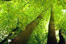 | Green |