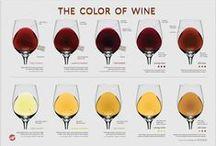 Wine 101 / by Drync Wine