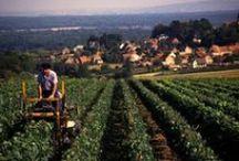 Burgundy / Burgundy / by Drync Wine