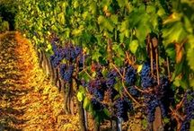 Napa Valley Treasures / by Drync