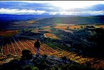 Rioja Raucous / by Drync Wine