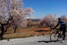 Cycling In the South Of Spain / Bike tours in Southern Spain. The best of the Andalucian countryside, the white villages and  historical sites like the Alhambra in Granada, the Mezquita in Cordoba and the Giralda Cathedral in Seville and amazing