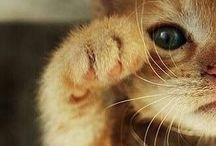 | Cats' |