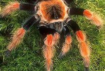 Arachnofarm / Tarantula wish list and best species.