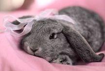 Rabbits!! <3