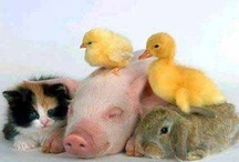 Animal friends...... / by linda