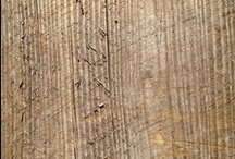 Wood Finish Options / Examples of wood interior and exterior trim, siding, exposed framing, etc.
