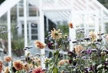 garden / by rebecca cluett