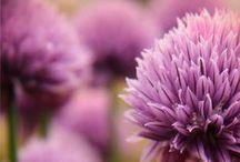 ~ Beauty of Flowers ~