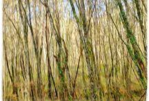 ARBRES / Peinture, gravures ou simples visions photographiques des arbres au travers des saisons, des lumières et des couleurs du temps.