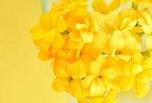 ~ Yellow ~