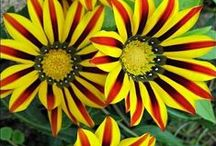 Des fleurs, toutes les fleurs... / Nous aimons les fleurs et souhaitons vous faire découvrir une palette infinie de couleurs et de formes