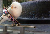 Skate boarding / by Iman Abbas