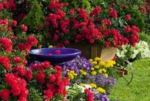 Garden Ideas / by connie johnson