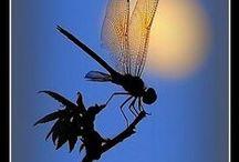 vážky - dragonflies
