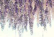 Purple Rain Wedding / Each month we will feature a different wedding theme. April's theme is Purple Rain! Have a theme idea or need help finding ideas for your wedding? Message us and we will feature your theme and help you find the best ideas for your wedding!