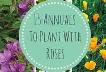 Floral Tips and Tricks / Ever wondered how florists make their arrangements so full and beautiful? What about how to care for your garden's roses? Here's your source for amazing floral and gardening tips.
