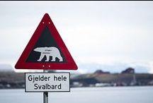Svalbard, royaume de l'ours polaire / L'archipel norvégien du Svalbard est presque voisin du pôle Nord et flirte avec l'océan Arctique. Une position géographique ingrate, mais qui, paradoxalement, a suscité la convoitise de bien des nations. Bienvenue dans un territoire unique en son genre, disputé entre les humains et les ours polaires.