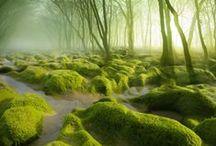 Forêts du monde / Les forêts les plus atypiques !