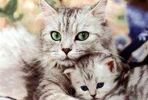 kittens / cute kittens
