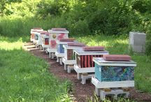 Beekeeping/Homestead / Urban and Rural Homesteading / by Rika James