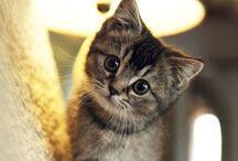 Cute Pets / Sobre bichinhos fofinhos / by Mariana Bitencourt