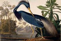 John James Audubon ~