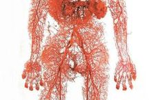 Anatomy / by Mark Costa