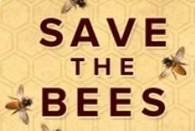 Queen Bee ~ / We need bees!!