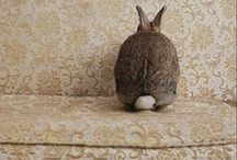 Bonkers for bunnies / by Elaine Field
