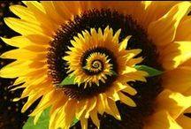 gardening plants nature Garten / Natur im weitesten Sinne