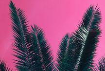 palms / Green