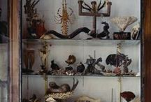 Curiosities & Collections / Fascinating collections of curios and vintage items a home filled with curiosity or Victoriana