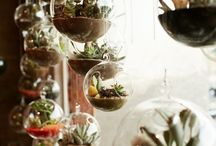 Succulents, Terrariums and Cacti / Styling and tips on succulents and cacti as house plants. Interior decor and terrariums.