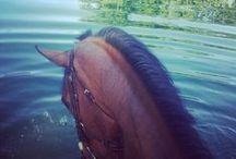 Horse Ranchers