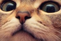 CAT / myrr