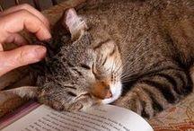 Gatos | Cat | Neko