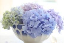 Inspiration hortensias