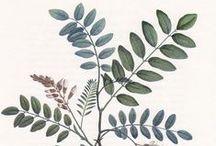 Blätter // Leaves
